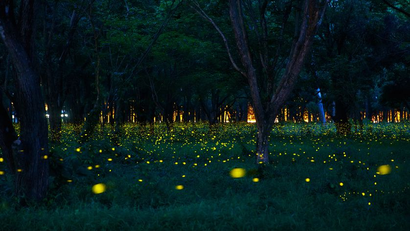 Bhandardara Lake Camping Fireflies Special Mumbai Pune